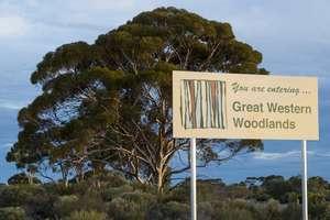 Great Western Woodlands (WA)