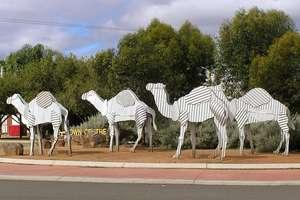 Camel statues in Norseman (WA)