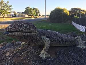 Big Bobtail Lizard at Port Lincoln