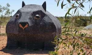 Big Wombat at Bookabie (SA)