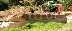 Big Bobtail at Kalamunda, Perth (WA)